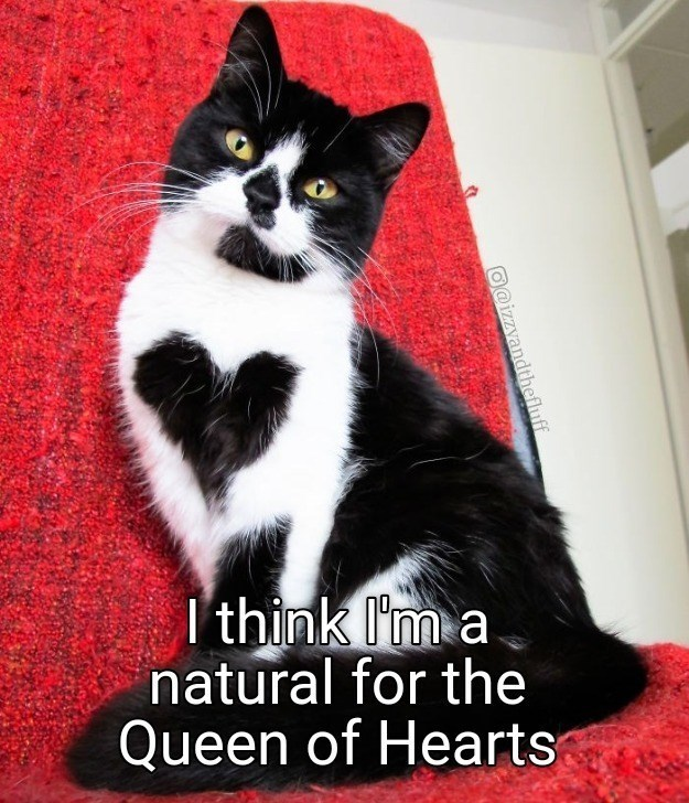 Cat - I'think l'm a natural for the Queen of Hearts O@izzyandthefluff