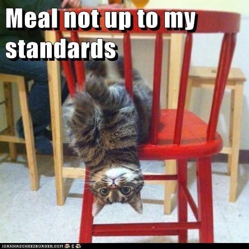 Cat - Meal not up to my standards ICANHASCHEEZBURGER.COM