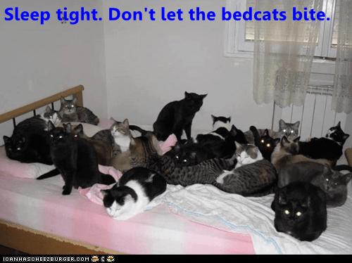 Cat - Sleep tight. Don't let the bedcats bite. ICANHASCHEEZBURGER.COM E