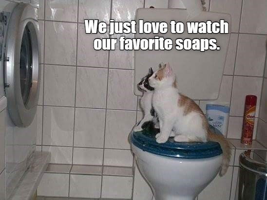 Cat - We just love to watch our favorite soaps. don ife
