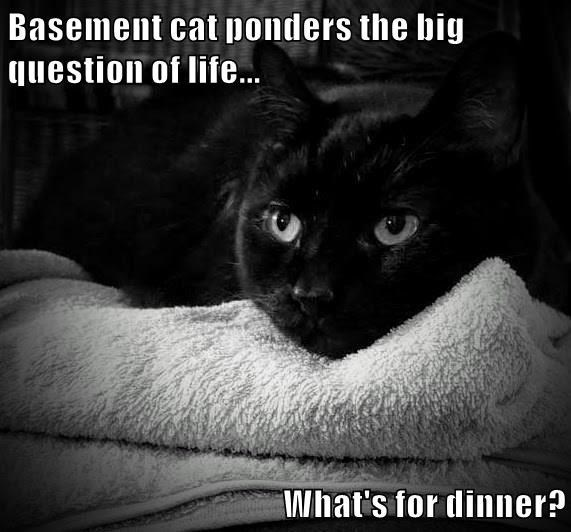 Cat - Basement cat ponders the big question of life. What's for dinner?