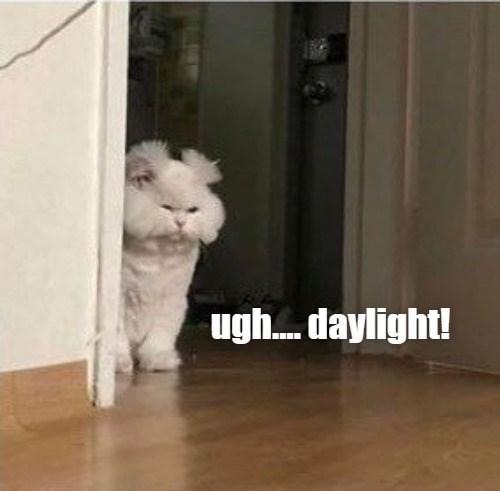 Cat - ugh. daylight!