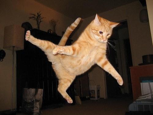 Cat - Fite