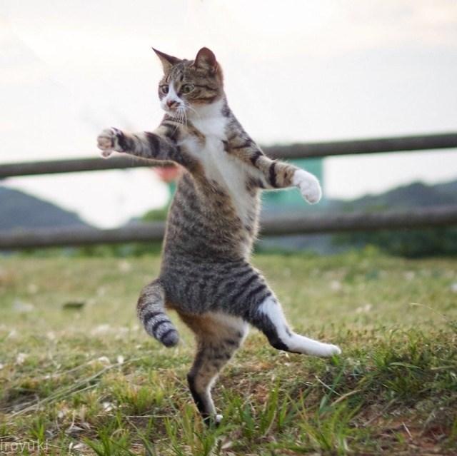 Cat - iroyuki