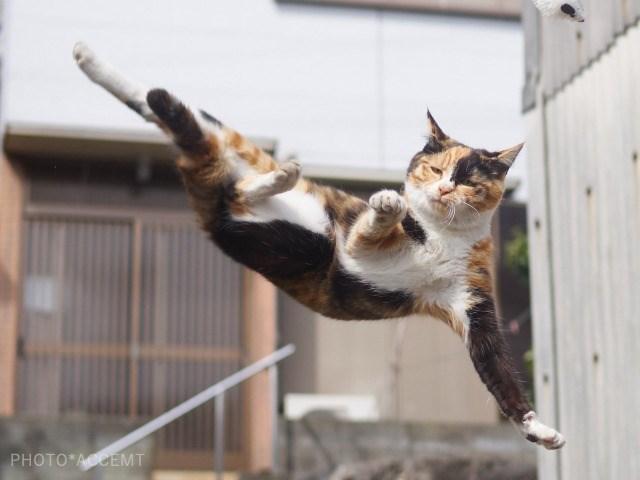 Cat - PHOTO ACCEMT