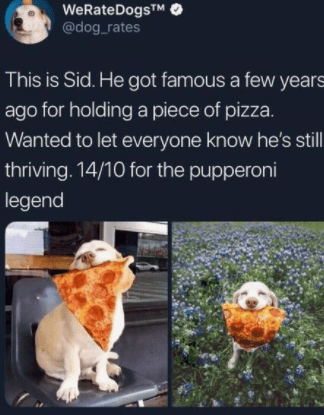 Adaptation - WeRateDogsT @dog_rates This is Sid. He got famous a few years ago for holding a piece of pizza. Wanted to let everyone know he's stll thriving. 14/10 for the pupperoni legend
