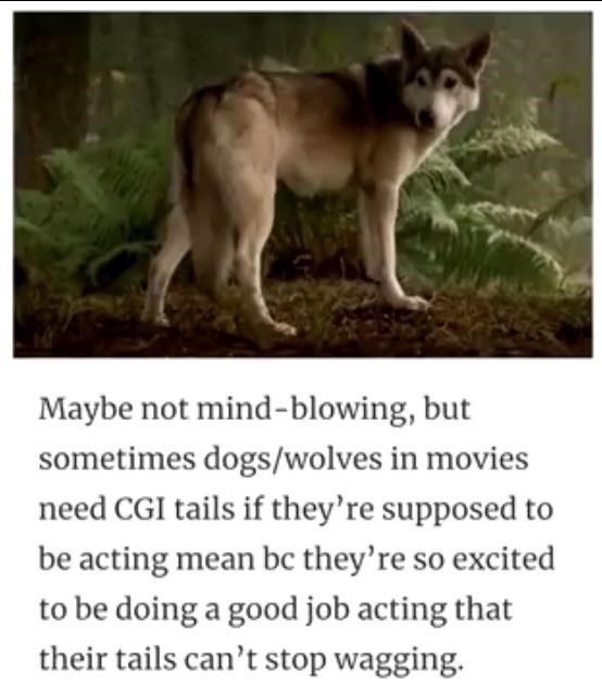 Mammal - Maybe not mind-blowing, but sometimes dogs/wolves in movies need CGI tails if they're supposed to be acting mean bc they're so excited to be doing a good job acting that their tails can't stop wagging.