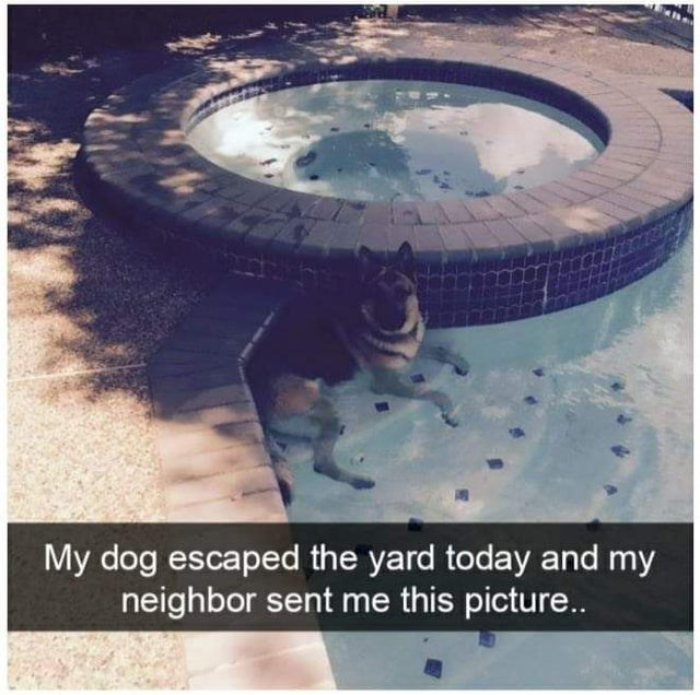 Water - My dog escaped the yard today and my neighbor sent me this picture...