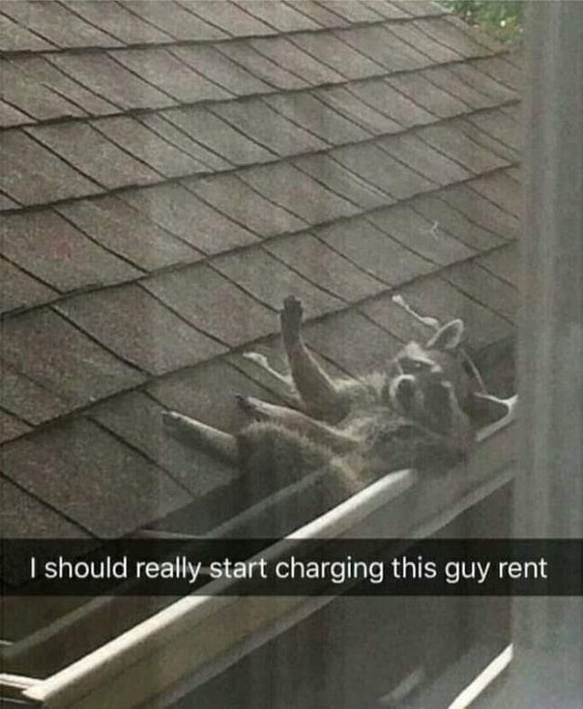 Roof - I should really start charging this guy rent