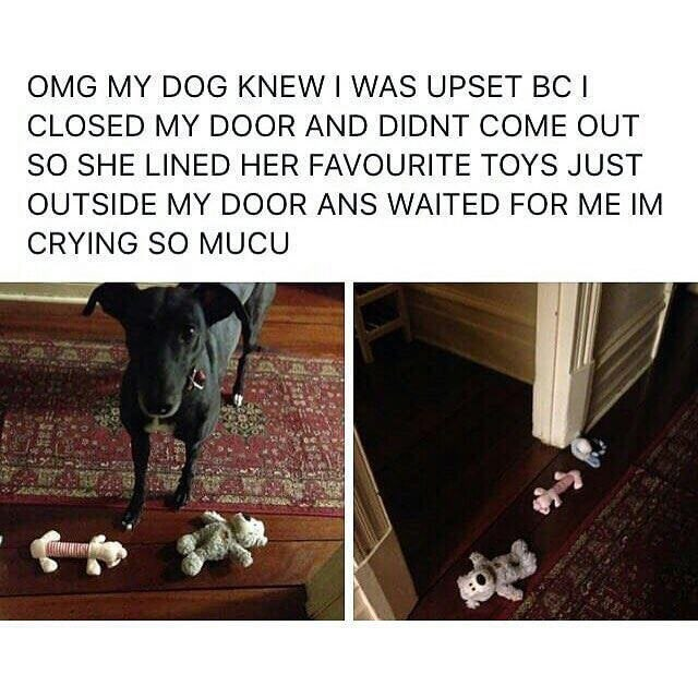 Text - OMG MY DOG KNEW I WAS UPSET BC I CLOSED MY DOOR AND DIDNT COME OUT SO SHE LINED HER FAVOURITE TOYS JUST OUTSIDE MY DOOR ANS WAITED FOR ME IM CRYING SO MUCU