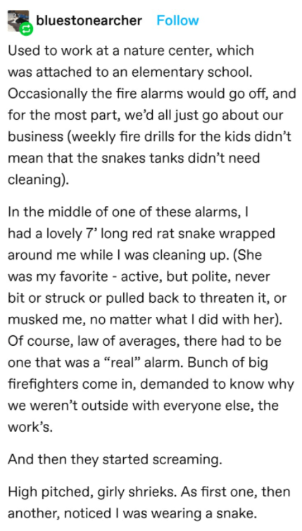 Text - bluestonearcher Follow Used to work at a nature center, which was attached to an elementary school. Occasionally the fire alarms would go off, and for the most part, we'd all just go about our business (weekly fire drills for the kids didn't mean that the snakes tanks didn't need cleaning). In the middle of one of these alarms, I had a lovely 7' long red rat snake wrapped around me while I was cleaning up. (She was my favorite - active, but polite, never bit or struck or pulled back to th