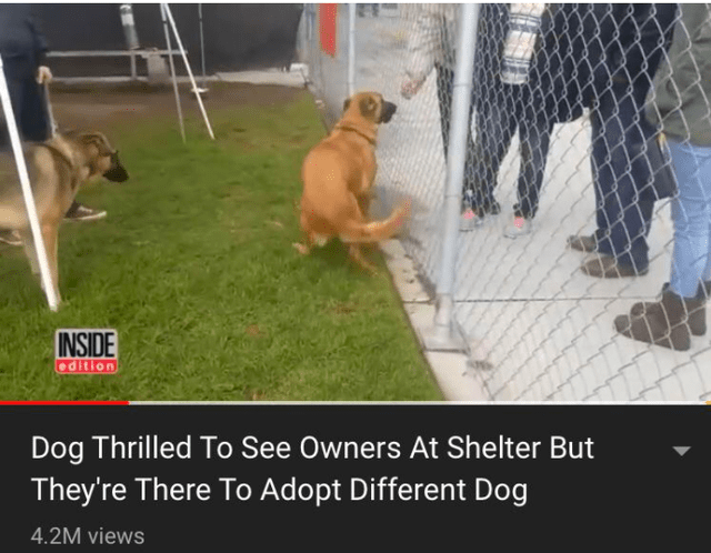 Dog - INSIDE edition Dog Thrilled To See Owners At Shelter But They're There To Adopt Different Dog 4.2M views