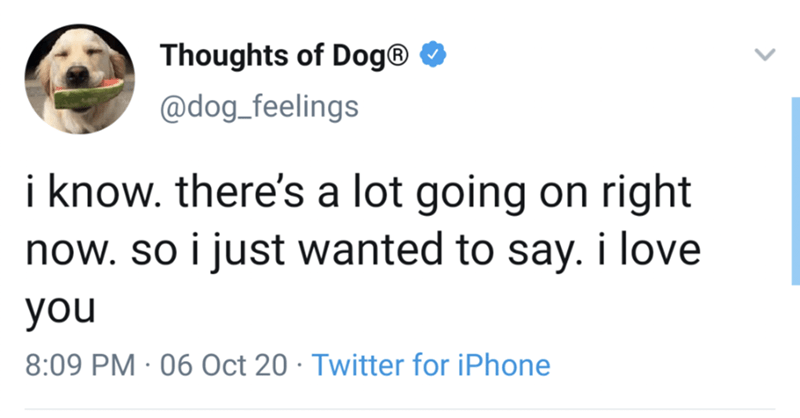 Text - Thoughts of Dog® O @dog_feelings i know. there's a lot going on right now. so i just wanted to say. i love you 8:09 PM · 06 Oct 20 · Twitter for iPhone