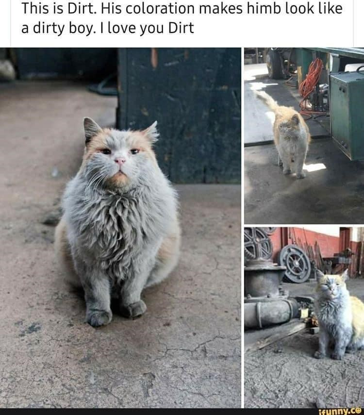 Cat - This is Dirt. His coloration makes himb look like dirty boy. I love you Dirt a ifunny.co