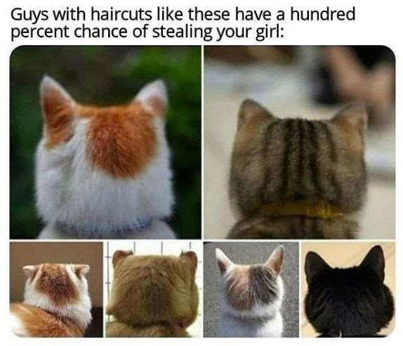 Cat - Guys with haircuts like these have a hundred percent chance of stealing your girl: