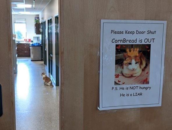 Cat - Please Keep Door Shut CornBread is OUT P.S. He is NOT hungry He is a LIAR