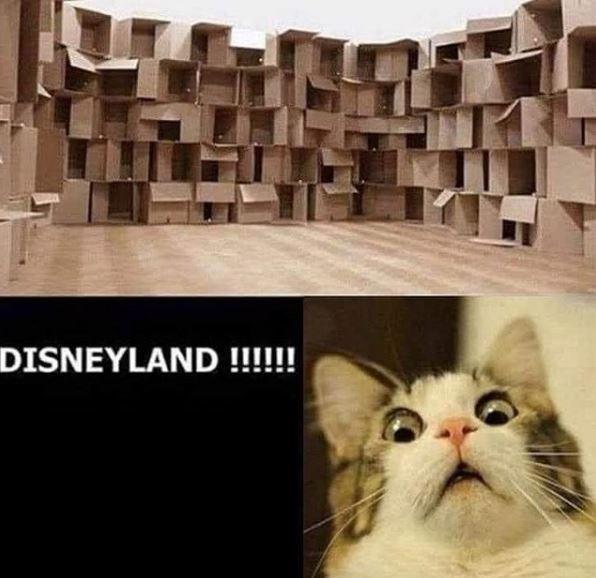 Cat - DISNEYLAND !!!!!!