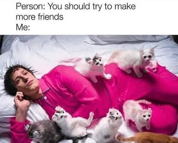 Cat - Person: You should try to make more friends Me: