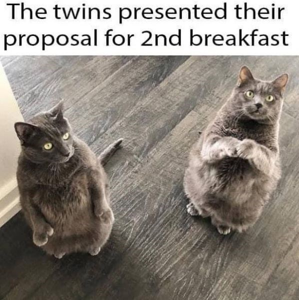 Cat - The twins presented their proposal for 2nd breakfast