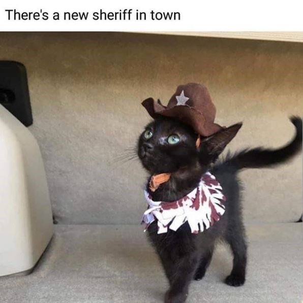 Cat - There's a new sheriff in town