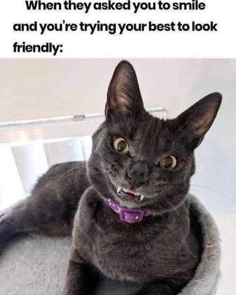 Cat - When they asked you to smile and you're tryingyour best to look friendly: