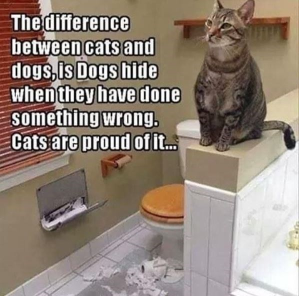 Cat - The difference between cats and dogs, is Dogs hide when they have done something wrong. Cats are proud of it.