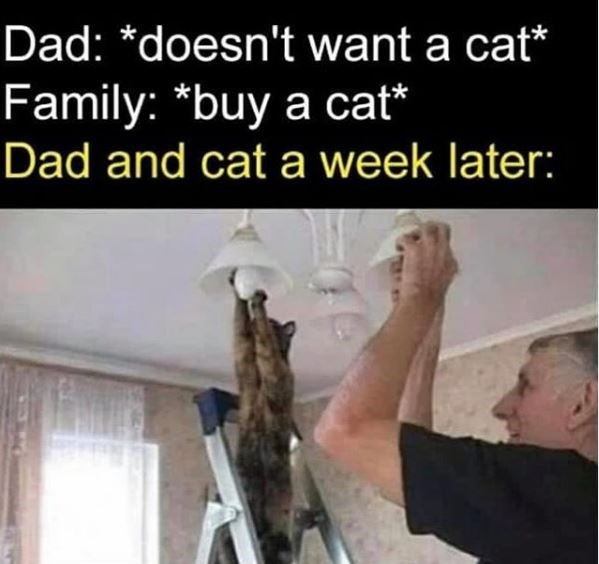 Human - Dad: *doesn't want a cat* Family: *buy a cat* Dad and cat a week later: