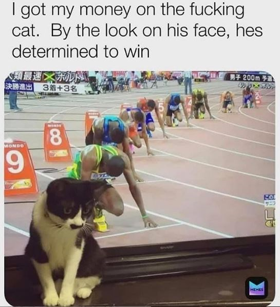 Dog - I got my money on the fucking cat. By the look on his face, hes determined to win N類最速 決勝進出3着+3名 男子 200m予 49 D 8. MONDO HEHES