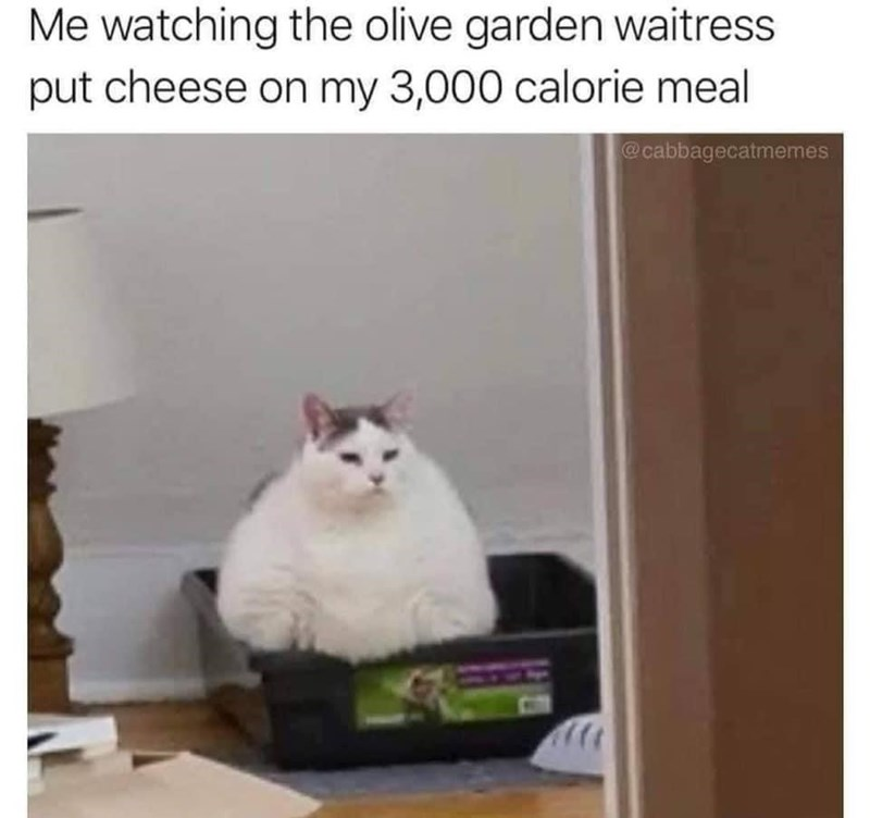 Cat - Me watching the olive garden waitress put cheese on my 3,000 calorie meal @cabbagecatmemes