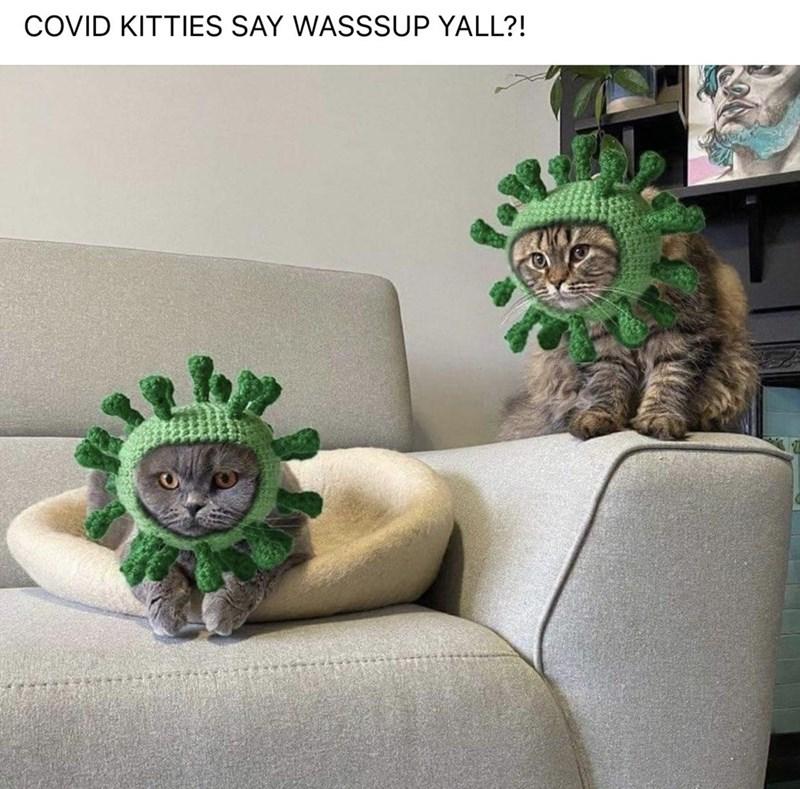 Green - COVID KITTIES SAY WASSSUP YALL?!