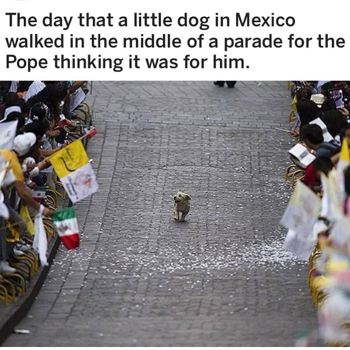 The day that a little dog in Mexico walked in the middle of a parade for the Pope thinking it was for him. cute tiny dog walking excitedly surrounded by celebrating people