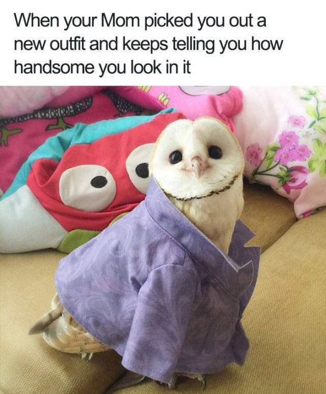 When your Mom picked you out a new outfit and keeps telling you how handsome you look in it cute owl in a purple dress shirt