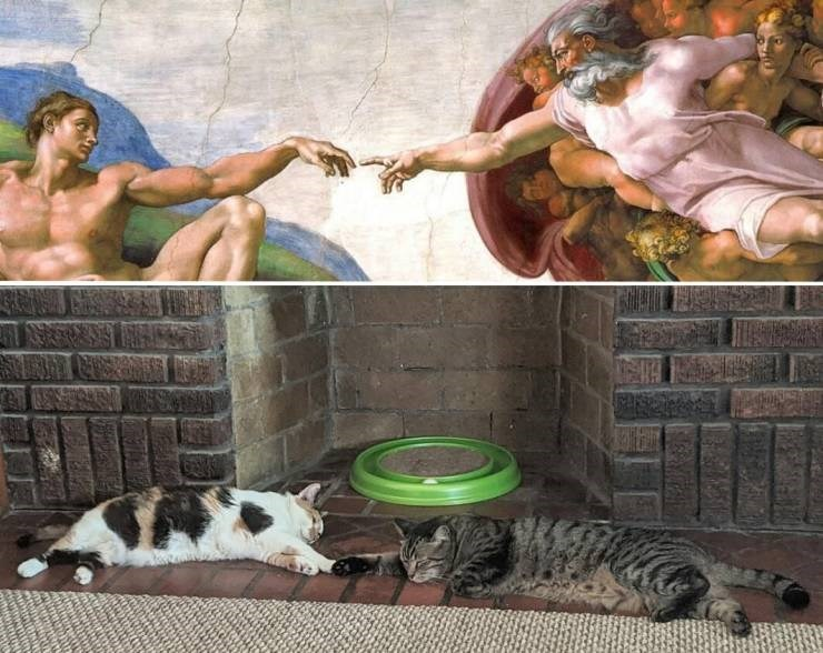 funny meme comparing the Creation of Adam painting by Michelangelo to a pic of two cats lying down with their paws touching