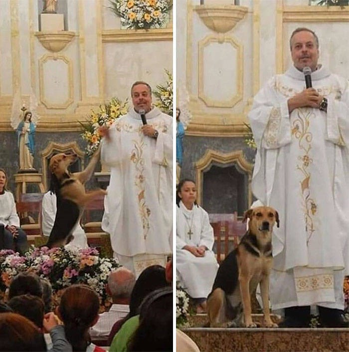 priest dogs stray mass