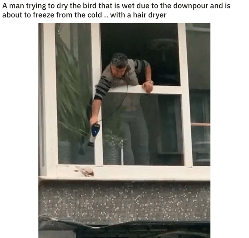 Product - A man trying to dry the bird that is wet due to the downpour and is about to freeze from the cold .. with a hair dryer