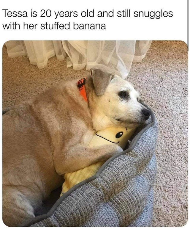 Mammal - Tessa is 20 years old and still snuggles with her stuffed banana