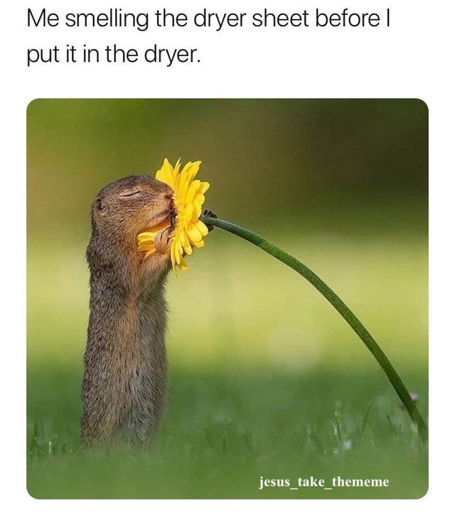 Adaptation - Me smelling the dryer sheet before I put it in the dryer. jesus_take_thememe