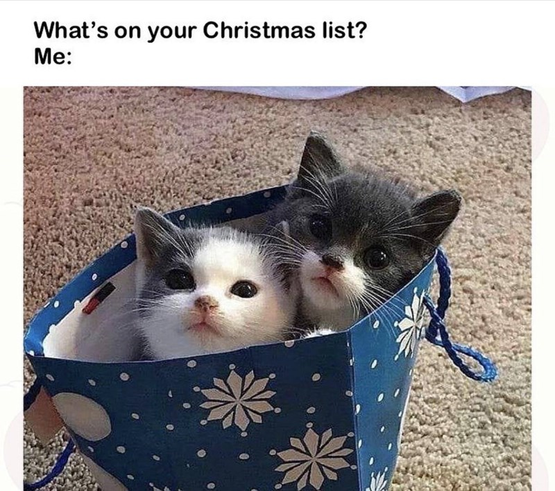 Cat - What's on your Christmas list? Me:
