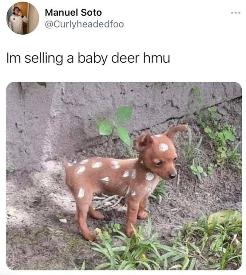 Canidae - Manuel Soto ... @Curlyheadedfoo Im selling a baby deer hmu