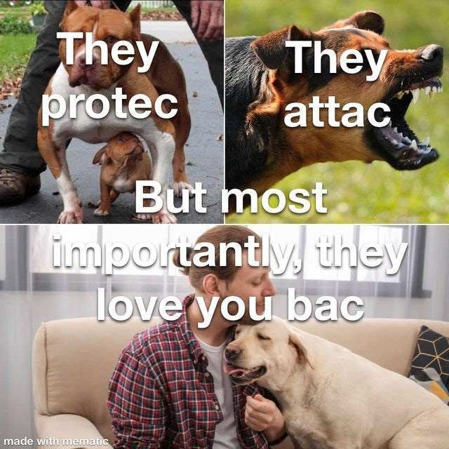 Dog breed - They protec They attac But most importantly they love you bac made with mematic