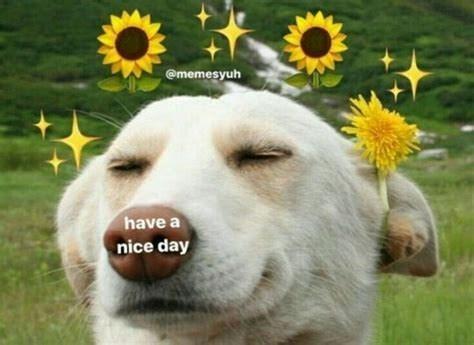 Dog - @memesyuh have a nice day