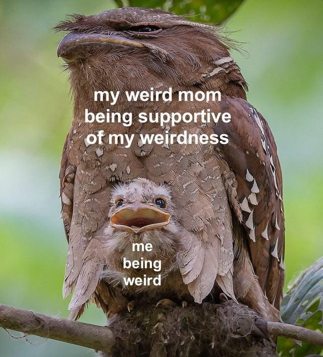 Bird - my weird mom being supportive of my weirdness me being weird
