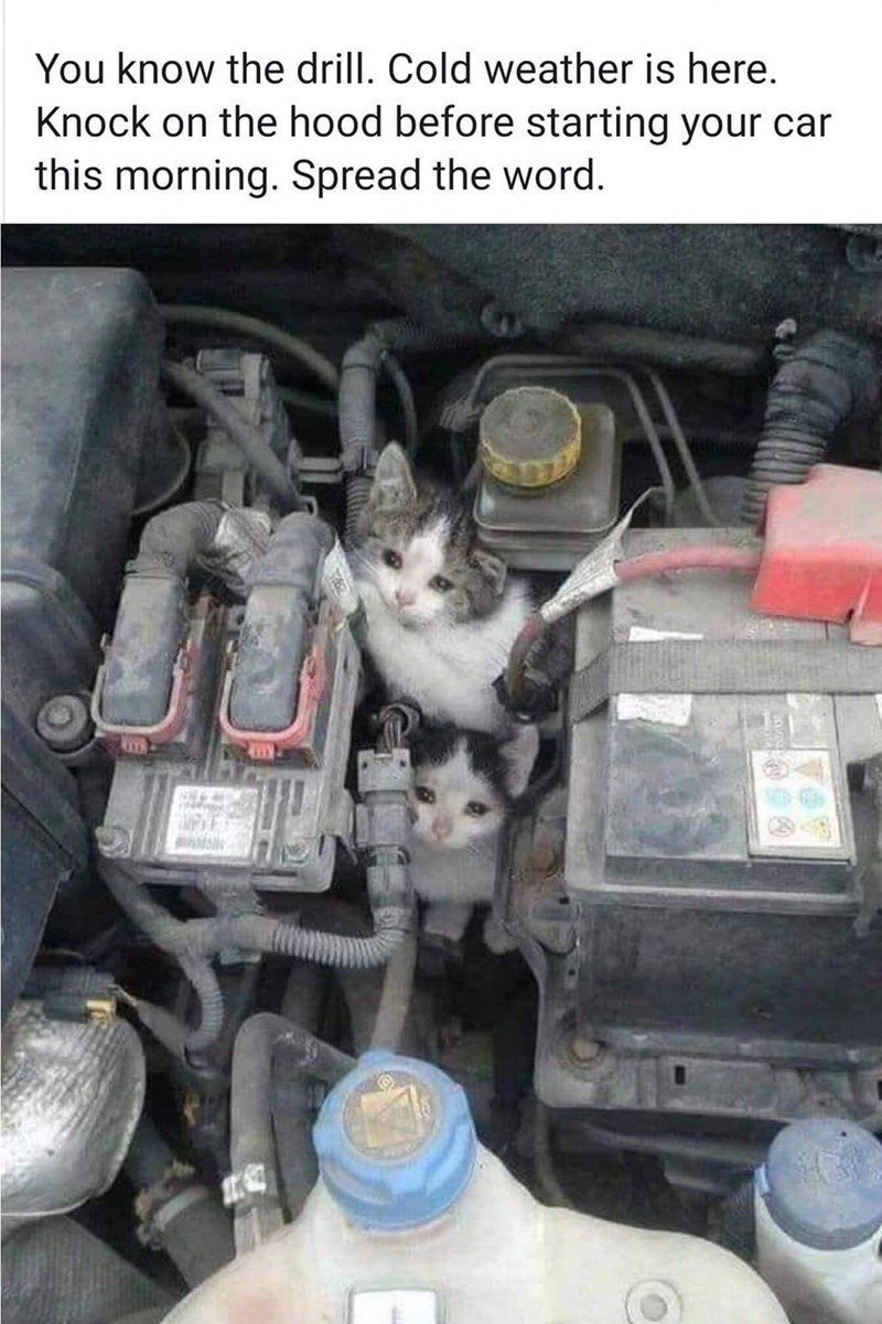 You know the drill. Cold weather is here. Knock on the hood before starting your car this morning. Spread the word. two small kittens hiding in a car engine