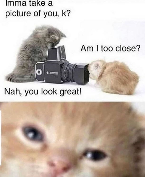 Cat - Imma take a picture of you, k? Am I too close? Nah, you look great!