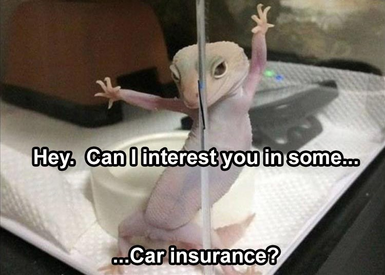 Photo caption - Hey. Can linterest you in some.0 .Car insurance?