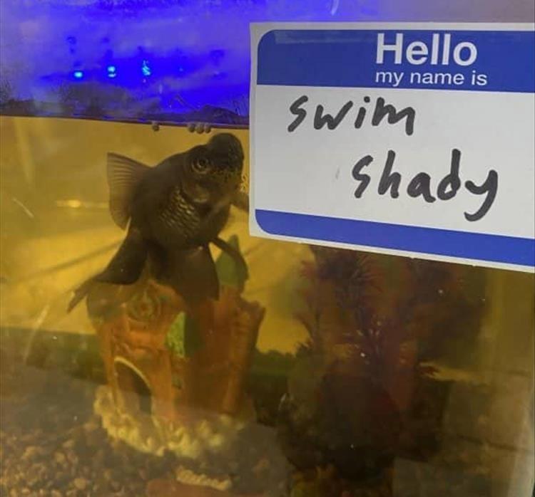 Organism - Hello my name is Swim shady