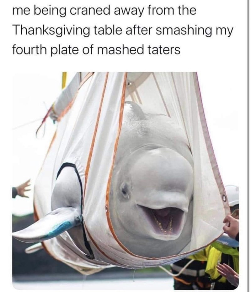 Nose - me being craned away from the Thanksgiving table after smashing my fourth plate of mashed taters
