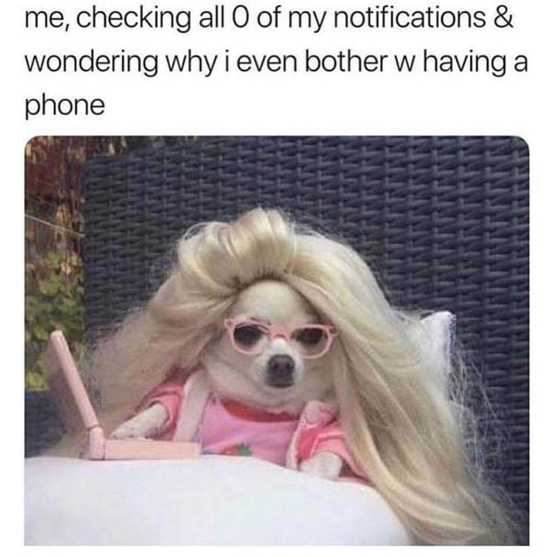 Dog - me, checking all O of my notifications & wondering why i even bother w having a phone