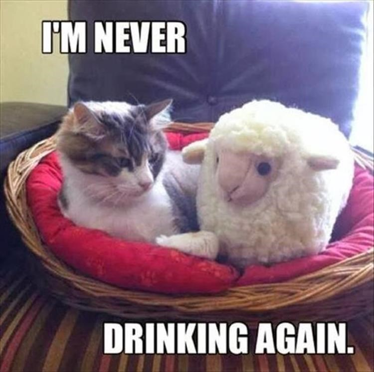 Cat - I'M NEVER DRINKING AGAIN.
