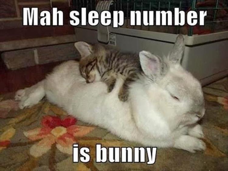 Mammal - Mah sleep number is bunny